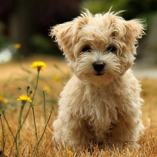Product picture Dog Potty Training - Dog training tips